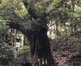 森・神社で癒された時間